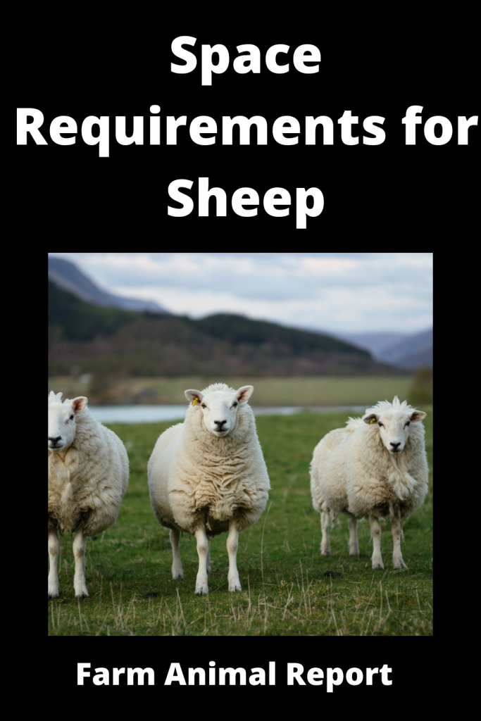 Complete Guide to Space Requirements for Sheep 2