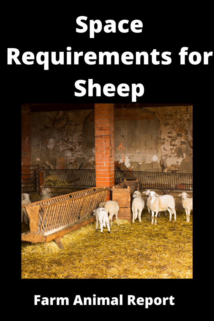 Complete Guide to Space Requirements for Sheep 3