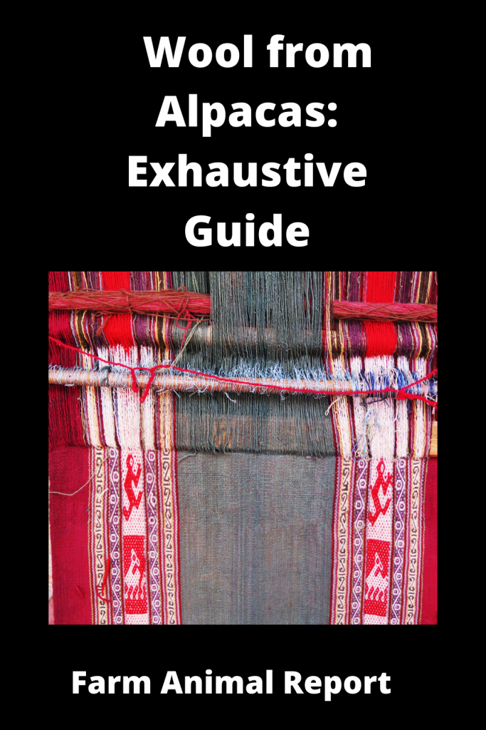 Wool from Alpacas: Exhaustive Guide 2