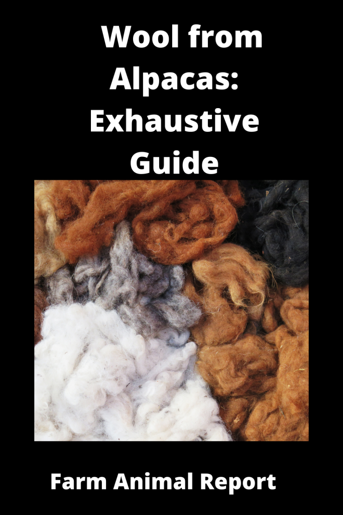 Wool from Alpacas: Exhaustive Guide 3