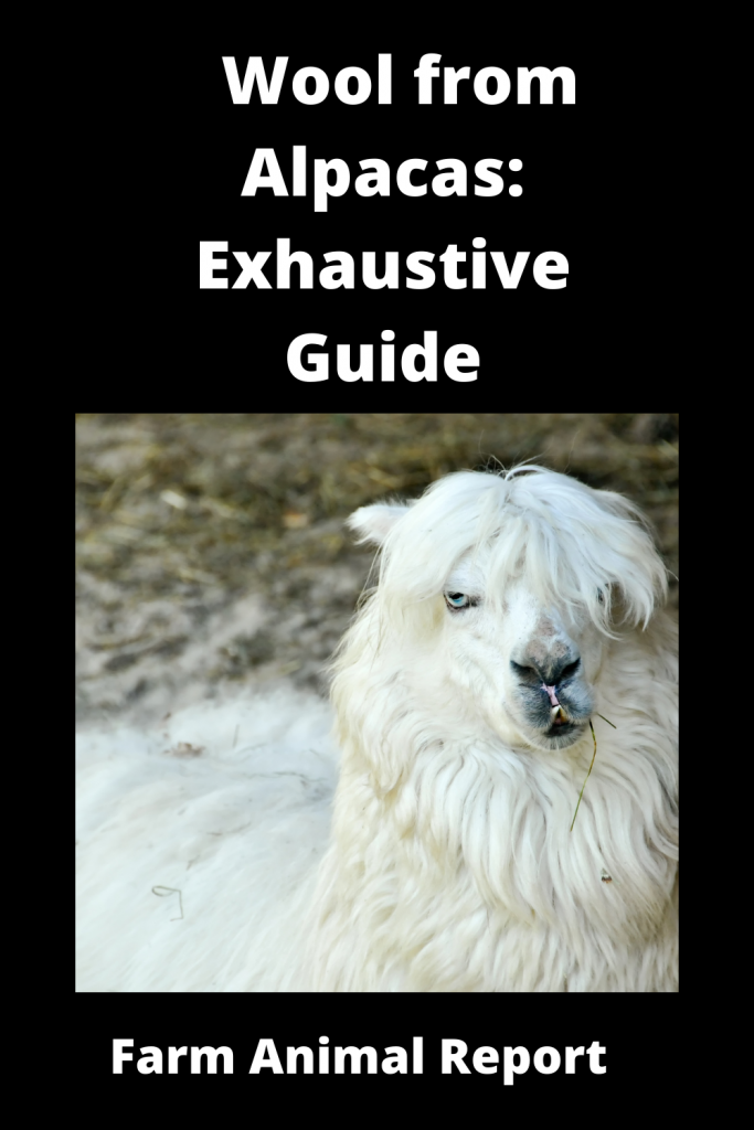 Wool from Alpacas: Exhaustive Guide 1