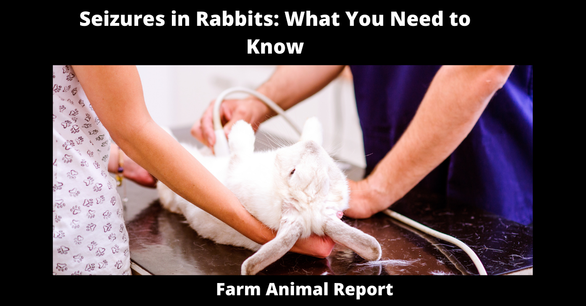 Seizures in Rabbits: What You Need to Know